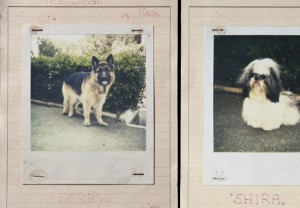 FourAndSons_PetShots_Feature_03